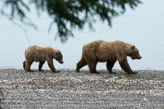 Mother and cub on the move
