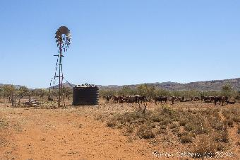 Classic outback shot - windmill for effect only, all now pumped by diesel!