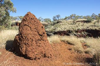 Termite mounds everywhere