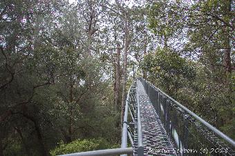 The over-rated and expensive tree top walk in the Valley of the Giant